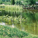 Landscape and decorative ponds
